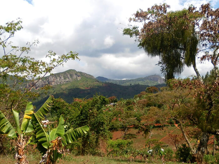 Usambara Mountains - Tanzania