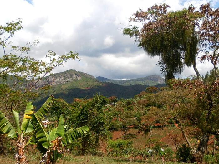 Usambara Mountains - Tanzania