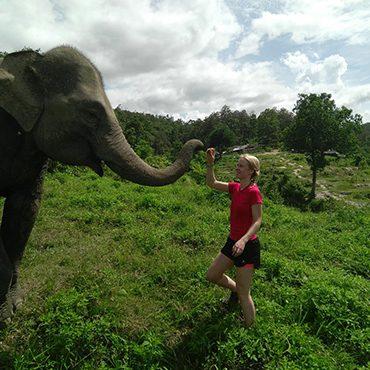 olifant-thailand