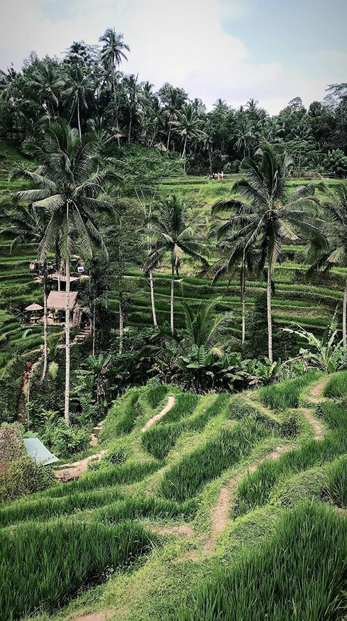 Indonesië natuur