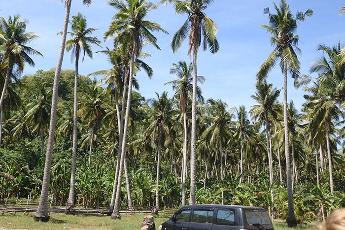 Indonesië jungle