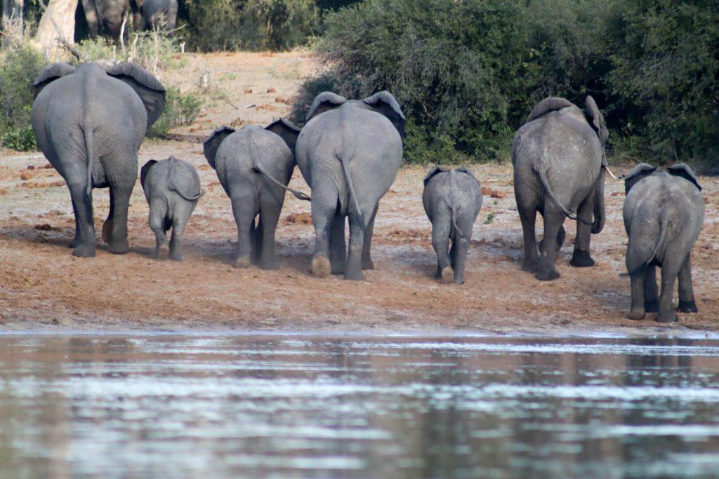 Olifanten Roadtrip Afrika