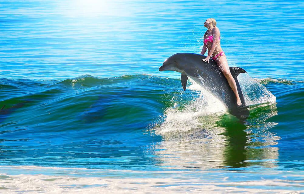 Bucketlist zwemmen met dolfijnen